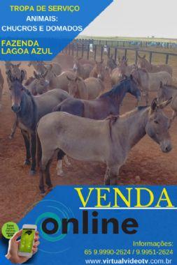 MUARES  - VENDA ONLINE