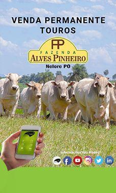 FAZENDA ALVES PINHEIRO